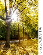 Аллея в осеннем городском парке. Стоковое фото, фотограф Максим Блинков / Фотобанк Лори