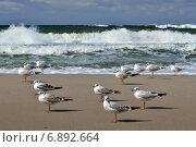 Купить «Чайки и штормовое Балтийское море», фото № 6892664, снято 21 января 2014 г. (c) Сергей Трофименко / Фотобанк Лори
