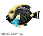Купить «Сувенир-экзотическая тропическая рыбка», фото № 6894452, снято 14 января 2015 г. (c) Стефания Домогацкая / Фотобанк Лори