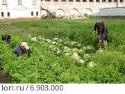 Монастырский огород (2004 год). Редакционное фото, фотограф михаил красильников / Фотобанк Лори