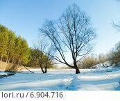 Купить «Дерево, стоящее на берегу водоема, покрытого снегом ясным зимним днем», фото № 6904716, снято 26 марта 2014 г. (c) Григорий Белоногов / Фотобанк Лори