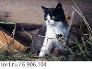 Уличный котенок. Стоковое фото, фотограф Мария Фомичева / Фотобанк Лори
