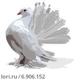 Купить «Белый голубь», иллюстрация № 6906152 (c) Веснинов Янис / Фотобанк Лори