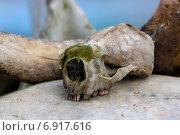 Купить «Старый череп калана», фото № 6917616, снято 29 августа 2012 г. (c) Дмитрий УТКИН / Фотобанк Лори