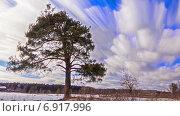 Купить «Сосна в поле, таймлапс», видеоролик № 6917996, снято 15 декабря 2014 г. (c) Никита Майков / Фотобанк Лори