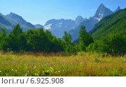 Купить «Цветущая поляна в горах Кавказа», фото № 6925908, снято 1 августа 2014 г. (c) александр жарников / Фотобанк Лори