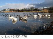 Купить «Кормление птиц в бухте Омега», фото № 6931476, снято 5 января 2015 г. (c) Ивашков Александр / Фотобанк Лори