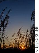 Рассвет в колосьях. Стоковое фото, фотограф Анна Милованова / Фотобанк Лори