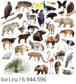 Peafowl and other asian animals. Isolated on white. Стоковое фото, фотограф Яков Филимонов / Фотобанк Лори