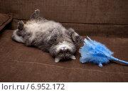 Купить «Кот лежит на спине и играет с игрушкой», фото № 6952172, снято 29 августа 2014 г. (c) Сурикова Ирина / Фотобанк Лори