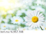 Купить «Природный фон с ромашками», фото № 6957108, снято 6 июля 2014 г. (c) Икан Леонид / Фотобанк Лори