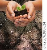 Купить «woman hands holding plant in soil», фото № 6983624, снято 12 декабря 2013 г. (c) Syda Productions / Фотобанк Лори