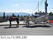 Карета  для прогулок с запряженной лошадью в ожидании клиентов (2014 год). Редакционное фото, фотограф Николай Новиков / Фотобанк Лори