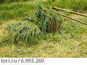 Корзины скошенной травы и косы. Стоковое фото, фотограф Ксения Семенова / Фотобанк Лори