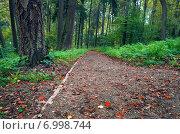 Купить «Дорожка в осеннем парке», фото № 6998744, снято 31 августа 2014 г. (c) Валерий Боярский / Фотобанк Лори