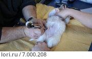 Купить «Нанесение клейма щенку», видеоролик № 7000208, снято 11 февраля 2015 г. (c) Сергей Лаврентьев / Фотобанк Лори