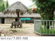 Носорог стоит под навесом в зоопарке города Хошимин (Сайгонский зоопарк) (2014 год). Редакционное фото, фотограф Ольга Кирсанова / Фотобанк Лори