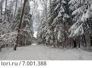 Дорога в зимнем лесу в Московской области. Стоковое фото, фотограф Валерий Боярский / Фотобанк Лори