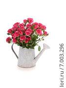Букет розовых роз в лейке на белом фоне. Стоковое фото, фотограф Елена Блохина / Фотобанк Лори