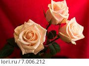 Розовые розы. Стоковое фото, фотограф Роман Гурков / Фотобанк Лори