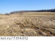 Купить «Весенний пейзаж - поле с прошлогодней травой и лес на горизонте», эксклюзивное фото № 7014012, снято 18 апреля 2014 г. (c) Елена Коромыслова / Фотобанк Лори