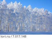 Деревья в инее. Стоковое фото, фотограф Андрей Силивончик / Фотобанк Лори