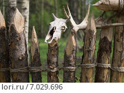 Купить «Череп оленя на заборе из бревен», фото № 7029696, снято 21 мая 2014 г. (c) Игорь Жиляков / Фотобанк Лори