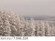 Зимний лес. Стоковое фото, фотограф Михаил Скутин / Фотобанк Лори