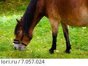 Лошадь. Стоковое фото, фотограф Roman Vukolov / Фотобанк Лори