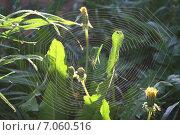 Паук на паутине. Стоковое фото, фотограф Евгений Пивоваров / Фотобанк Лори
