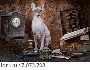 Купить «Портрет кошки породы сфинкс на столе в кабинете», фото № 7073708, снято 15 февраля 2015 г. (c) Алексей Кузнецов / Фотобанк Лори