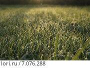 Роса на траве. Стоковое фото, фотограф Лия Ерхонина / Фотобанк Лори