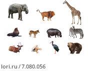 Купить «Коллаж из диких животных», фото № 7080056, снято 17 февраля 2019 г. (c) Наталья Волкова / Фотобанк Лори