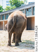 Elephant in the zoo during summer day. Стоковое фото, фотограф Elnur / Фотобанк Лори
