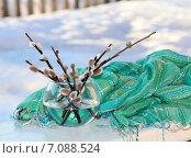 Купить «Весенний натюрморт с вербой», фото № 7088524, снято 21 марта 2014 г. (c) Марина Орлова / Фотобанк Лори