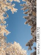 Купить «Заснеженные ветки деревьев и небо», фото № 7089772, снято 19 января 2014 г. (c) Виталий Веревкин / Фотобанк Лори