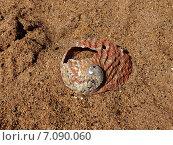 Ракушка на песке. Стоковое фото, фотограф Юлия Незнаева / Фотобанк Лори
