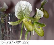 Орхидеи крупным планом. Стоковое фото, фотограф Владимир Борисов / Фотобанк Лори