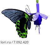 Купить «Бабочка на цветке», иллюстрация № 7092420 (c) Веснинов Янис / Фотобанк Лори