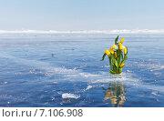 Купить «Байкал. Букет весенних тюльпанов на льду в день 8 Марта», фото № 7106908, снято 8 марта 2015 г. (c) Виктория Катьянова / Фотобанк Лори