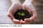 Купить «close up of woman hands holding soil with sprout», видеоролик № 7108420, снято 5 марта 2015 г. (c) Syda Productions / Фотобанк Лори