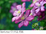 Цветы. Стоковое фото, фотограф Мариана Бэлэнеску / Фотобанк Лори