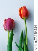 Тюльпаны. Стоковое фото, фотограф Aleksandr Tishkov / Фотобанк Лори