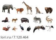 Купить «Коллаж из диких животных», фото № 7120464, снято 17 февраля 2019 г. (c) Наталья Волкова / Фотобанк Лори