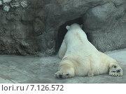 Белый мишка. Стоковое фото, фотограф Елена Рыбкина / Фотобанк Лори