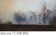 Купить «Горящее поле», видеоролик № 7136952, снято 18 марта 2015 г. (c) Smolin Ruslan / Фотобанк Лори