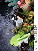 Купить «Луковицы цветов и садовый инвентарь», фото № 7138936, снято 5 марта 2015 г. (c) Natasha Breen / Фотобанк Лори