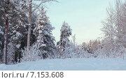 Купить «Зимний лес с сугробами и ветками деревьев в снегу. Карелия. Россия», видеоролик № 7153608, снято 31 января 2015 г. (c) Кекяляйнен Андрей / Фотобанк Лори