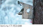 Купить «Домик-кормушка для птиц на сосне, зима», видеоролик № 7153648, снято 31 января 2015 г. (c) Кекяляйнен Андрей / Фотобанк Лори