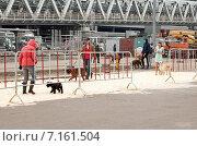 """Купить «Выставка """"Евразия-2015"""": оборудованная площадка для выгула собак», эксклюзивное фото № 7161504, снято 21 марта 2015 г. (c) Константин Косов / Фотобанк Лори"""